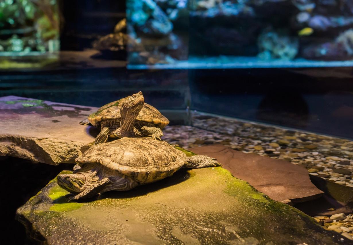 Deux tortues