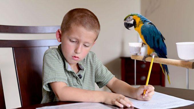 Perroquet enfant