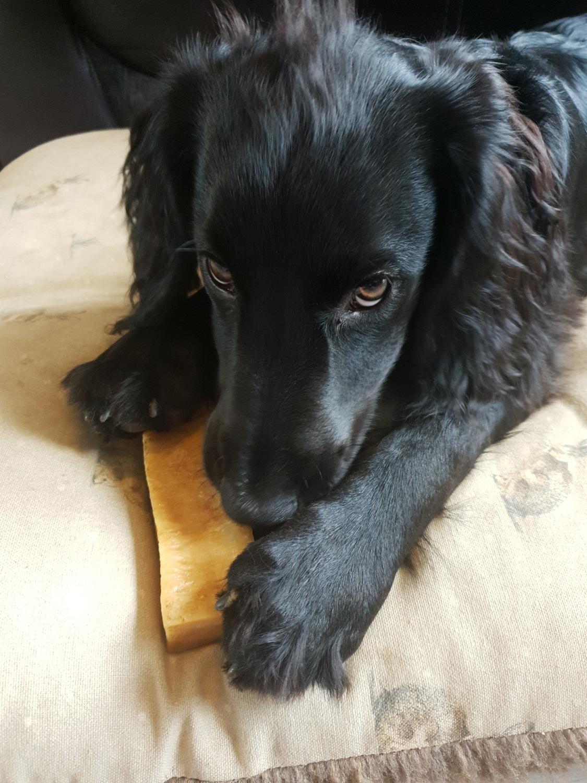 Un chien avec un os fromage