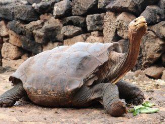 La tortue Diego