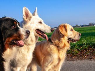 3 différentes races de chien